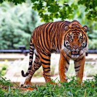 40 lat bydgoskiego Zoo!