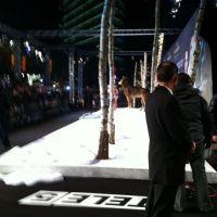 ZMIERZCH: Zobacz jak zwycięzcy konkursu WEEKEND PRZED ZMIERZCHEM bawili się na premierze w Berlinie! [FOTOGALERIA]